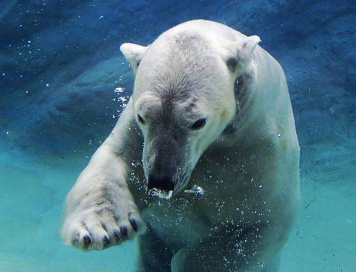 Día Mundial de los Animales: un grito de conciencia por la vida en el planeta